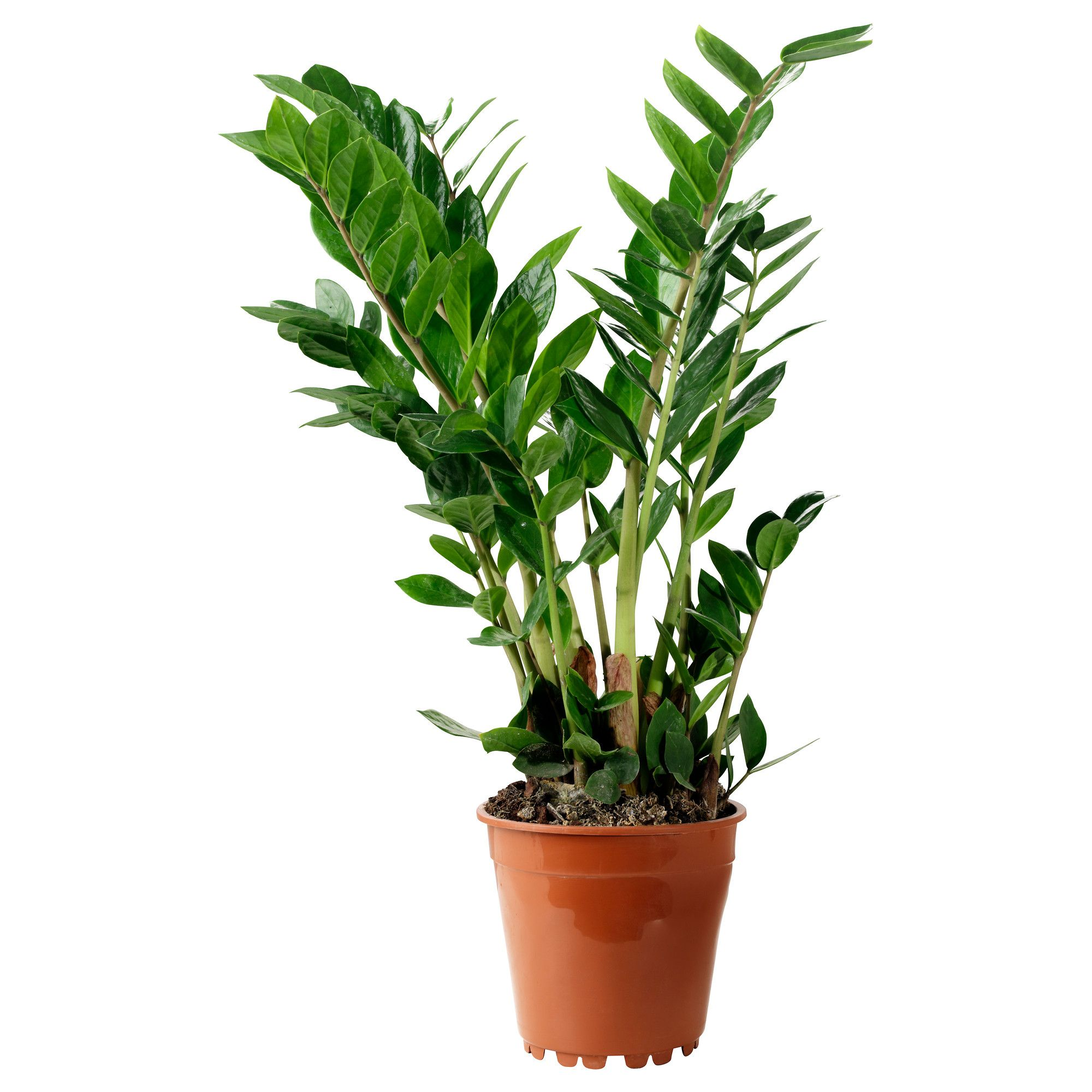 Fresh Low Maintenance Potted Plants