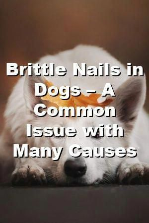 Sue Campbell Tells About Brittle Nails in Dogs – A Common Issue with Many Causes #dogsdiys#catsanddogs#dogsandpuppies#dogspuppys#dogs#cutedogs#animaldiyspets#doglife #HairLossCure #VestigeHairLossTreatment #HairLossTreatmentTypes