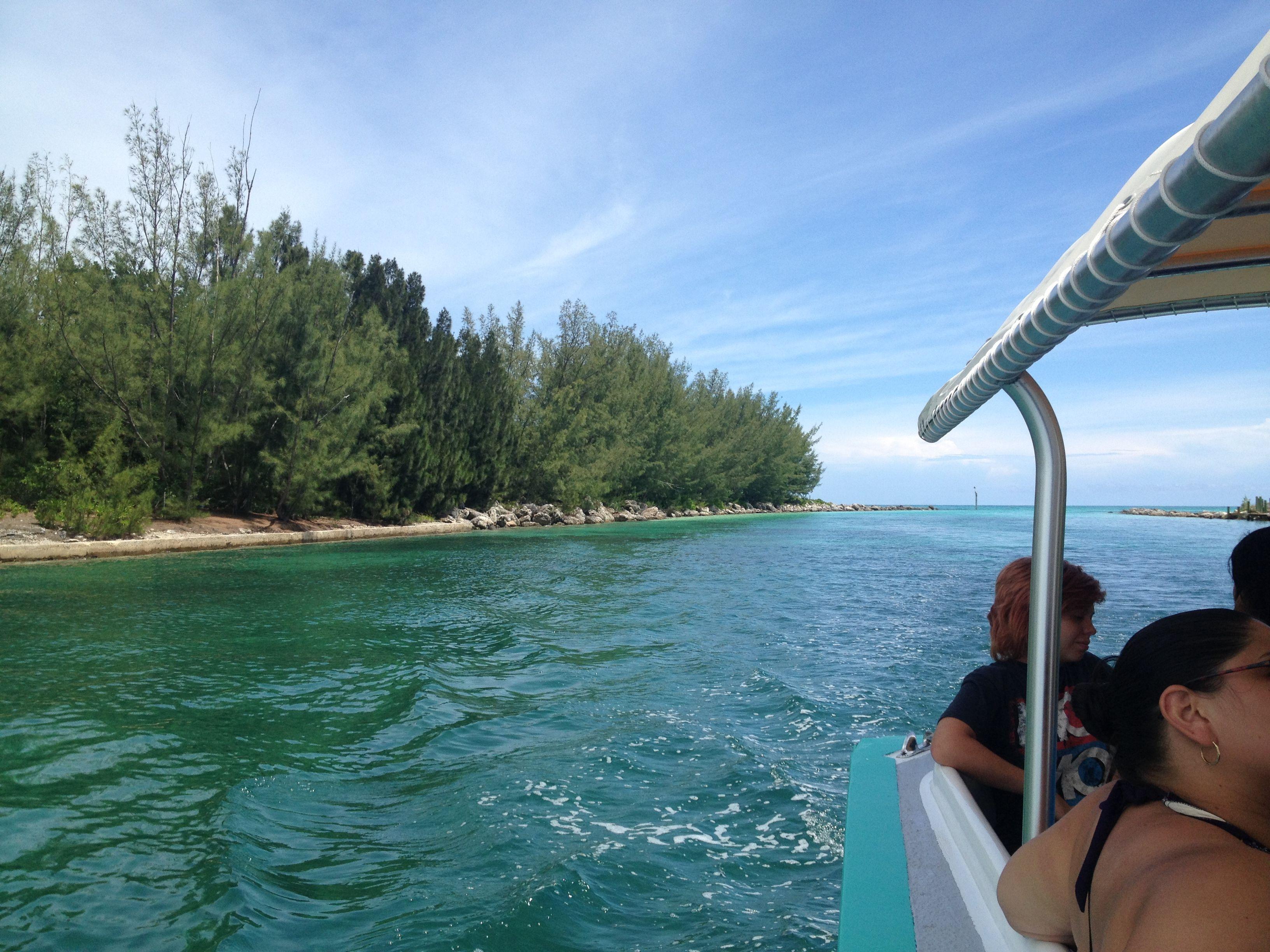 freeport bahamas dolphin encounter
