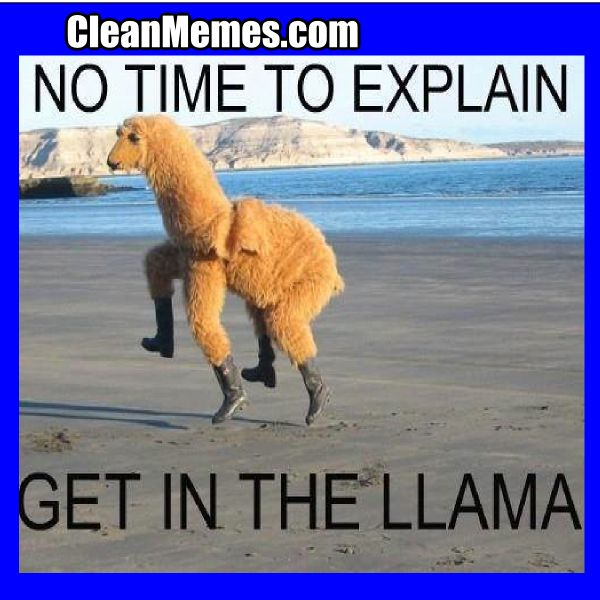 Cleanmemes Cleanfunnyimages Www Cleanmemes Com Funny Pictures Funny Llama Funny Pictures With Captions