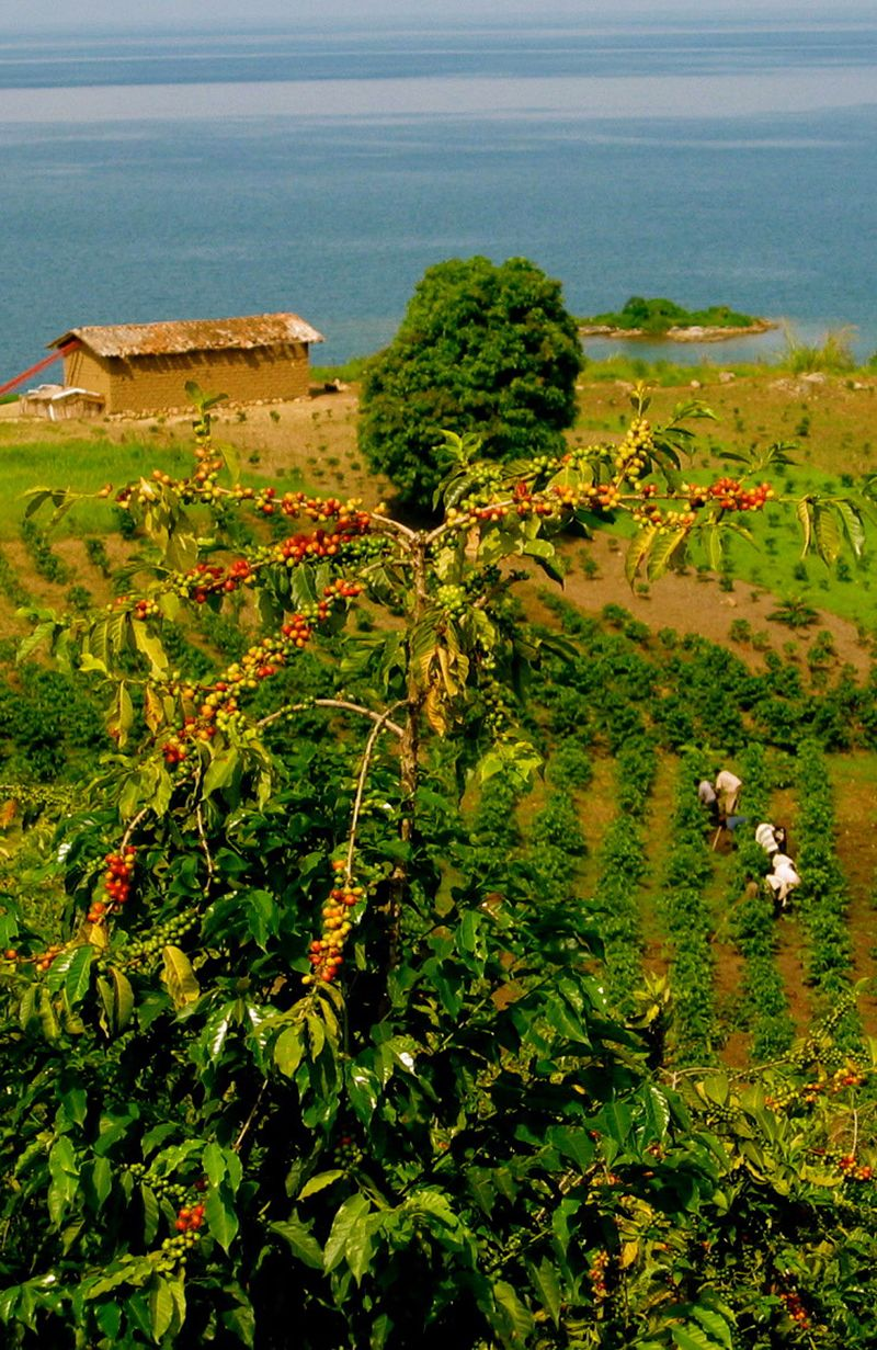 Coffee farmers in Rwanda! Read more: | Coffee farm ...