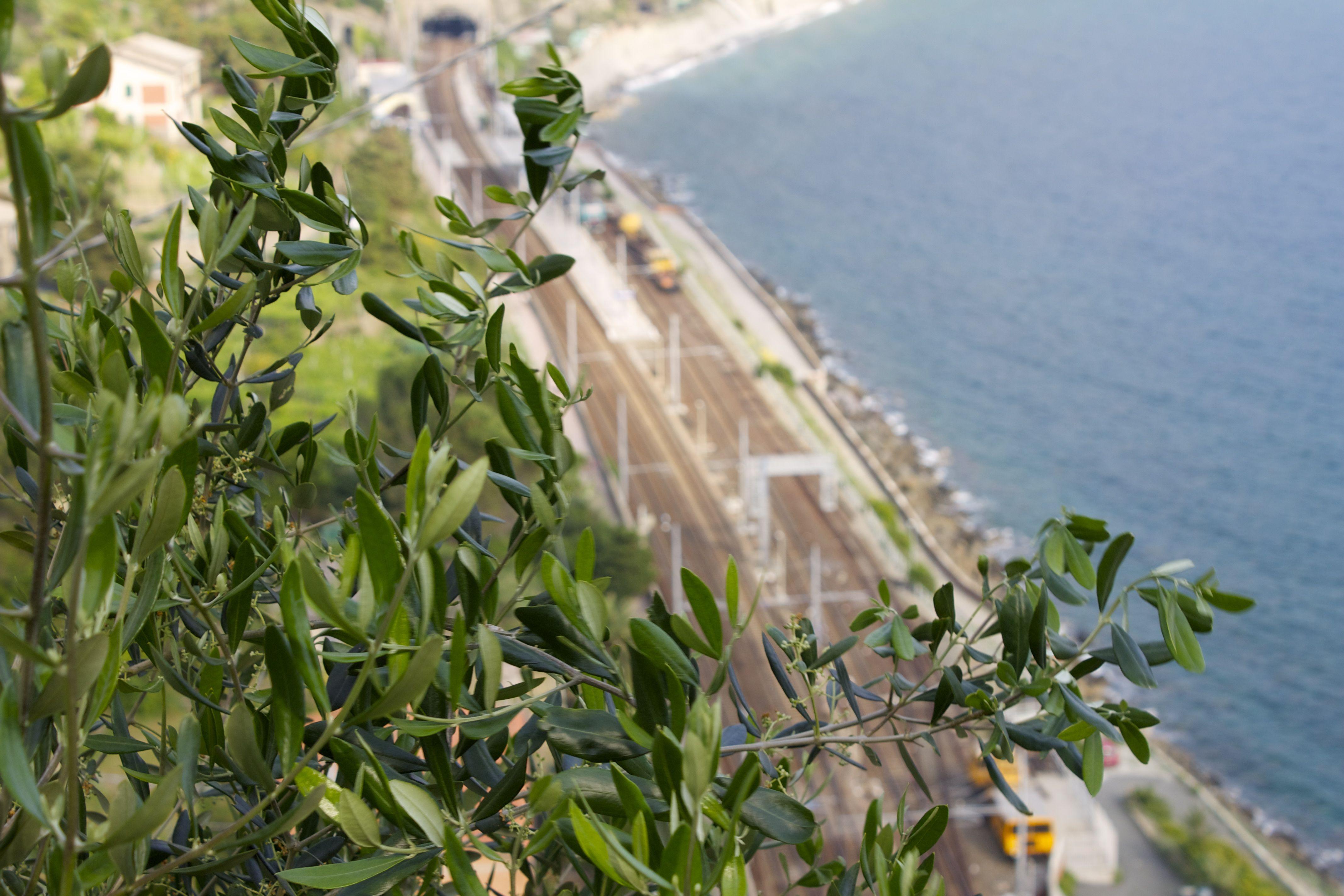 Train-station at the food of Corniglia, Cinque Terre, Italy.  June 2012.
