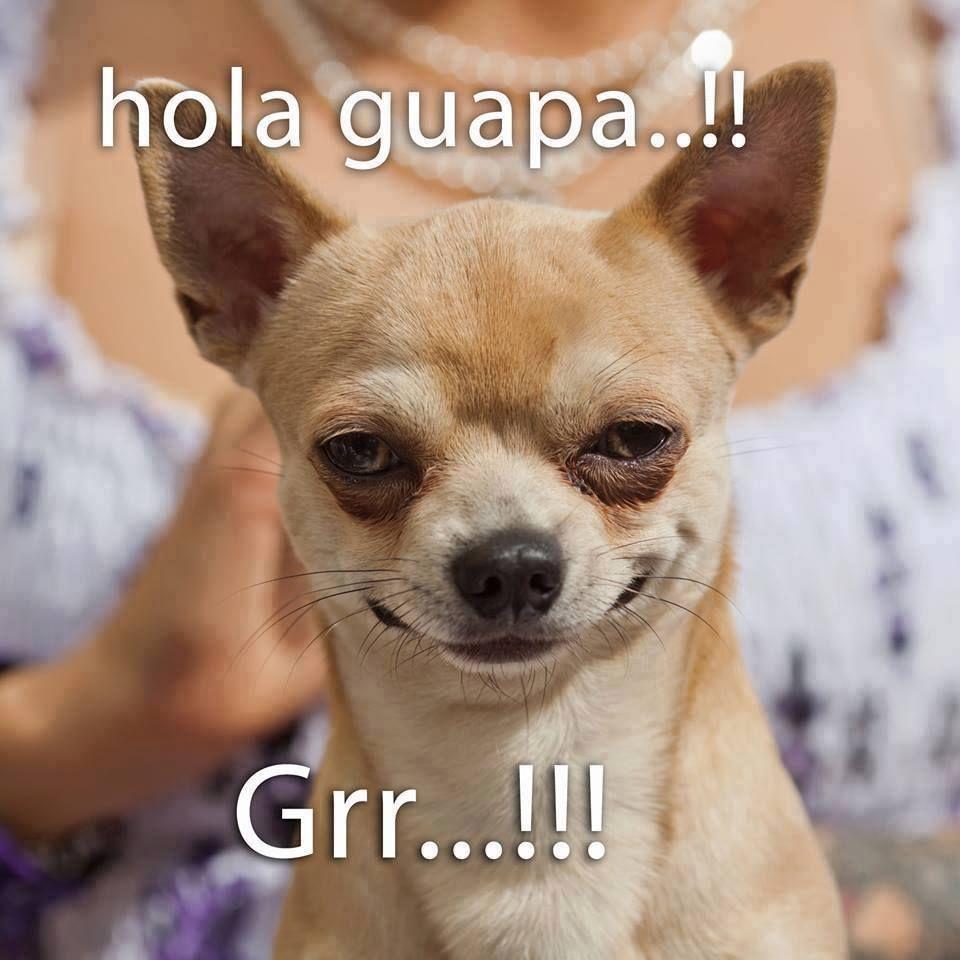 Pin De Nadja Porcell En Humor Memes De Perros Chistosos Mascotas Memes Perros