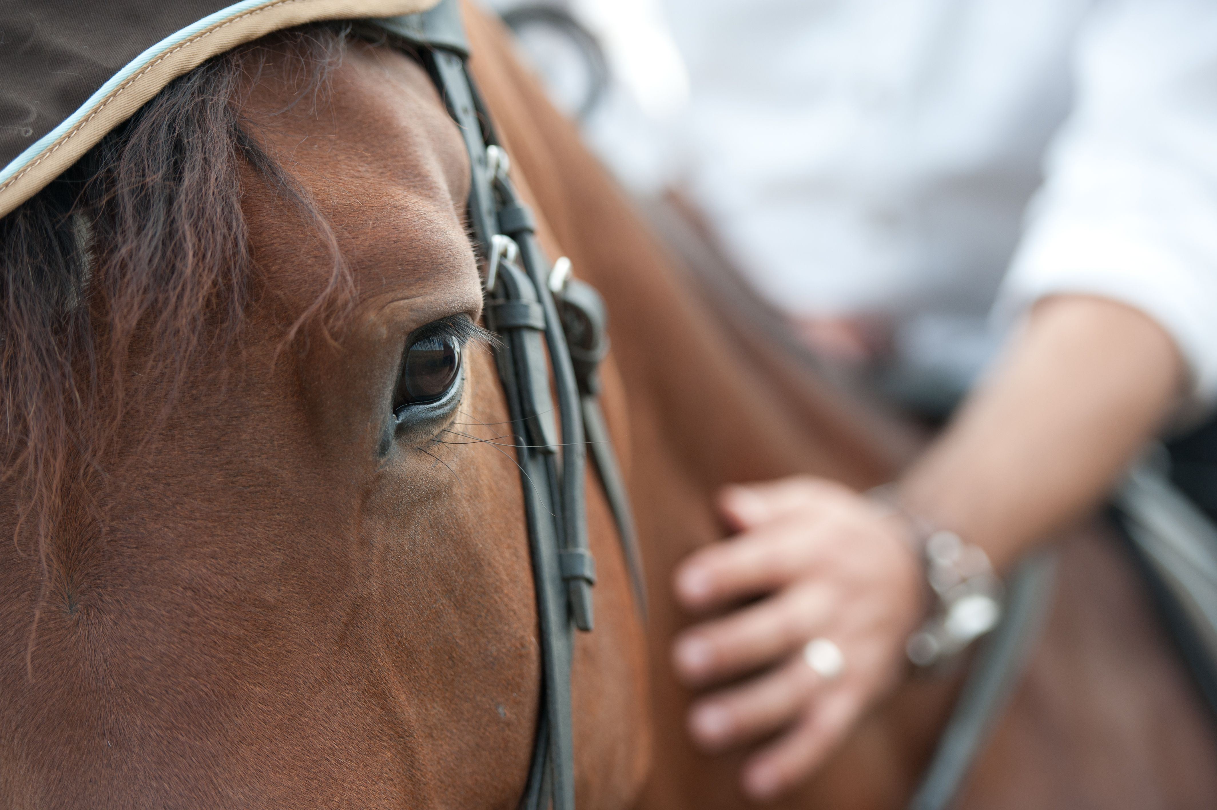Horsemanship therapy program to benefit from insurance