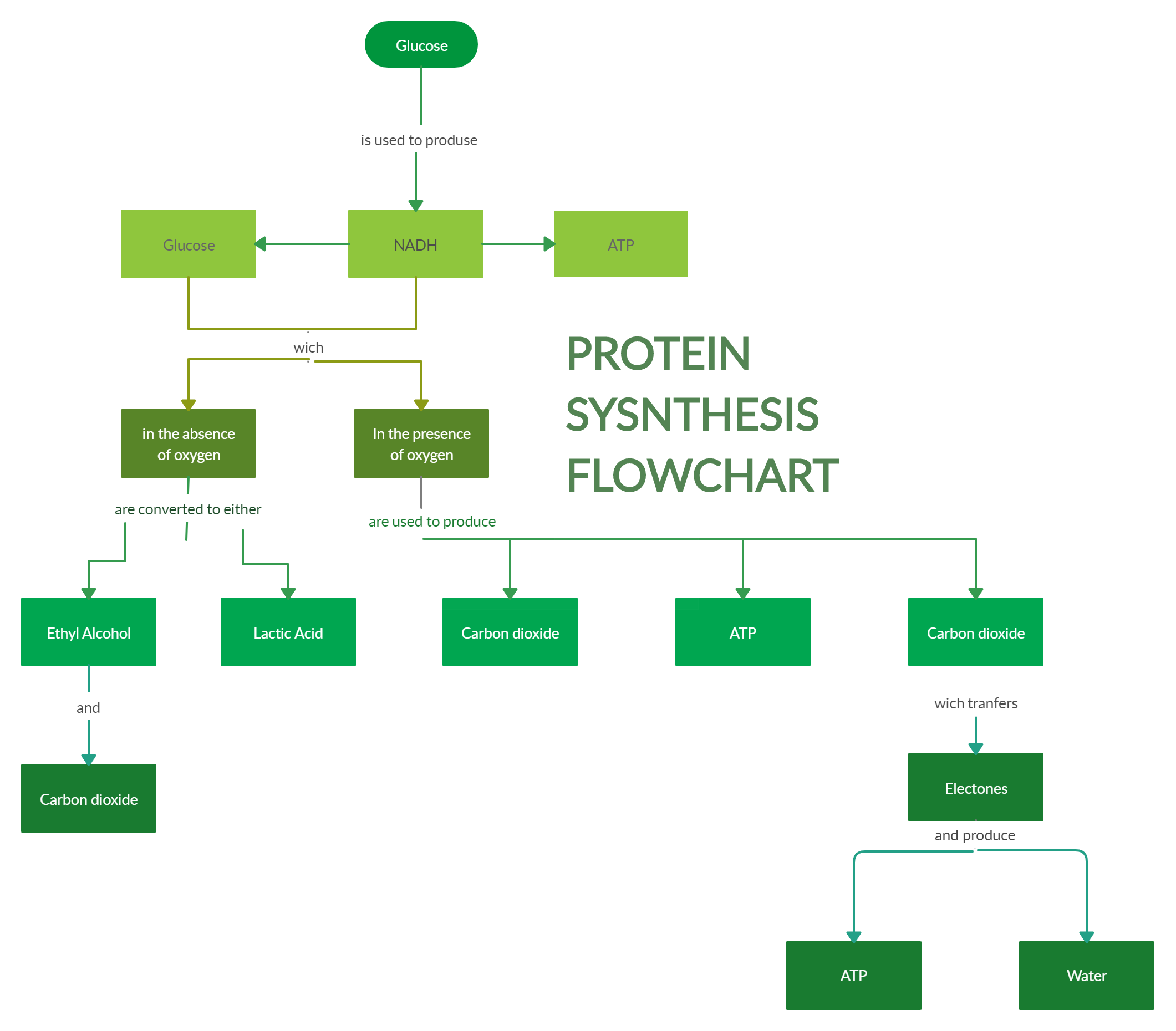 Protein Synthesis Flowchart Flow Chart Protein Synthesis Templates