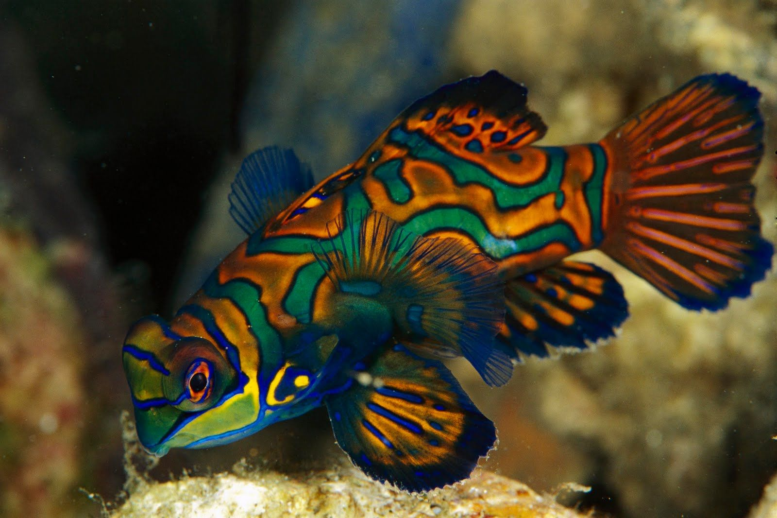 Animal Fish Wallpaper Background X