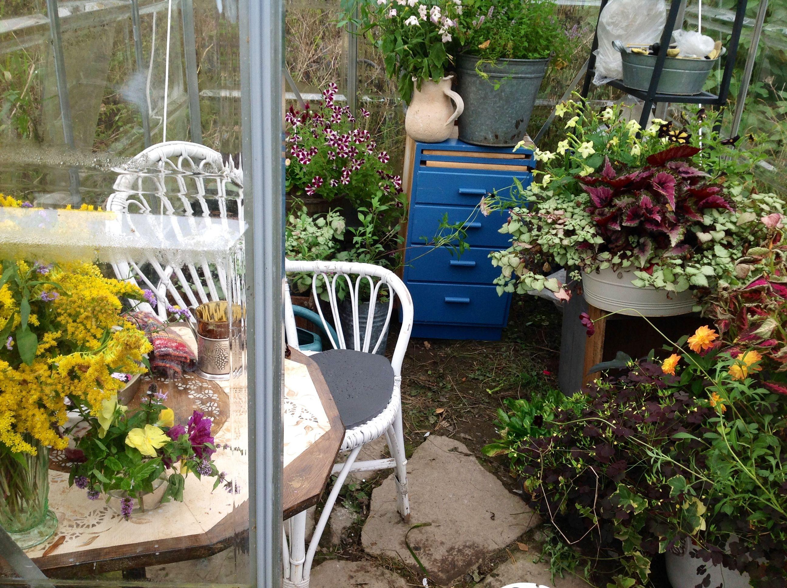 Kesäkukat kasvihuoneessa syksyä paossa - Annuals in pots seeking shelter against Mr. Frost