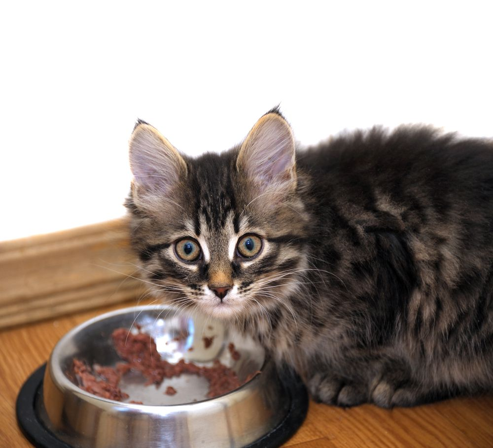 Can cats eat oatmeal and what are the benefits for cats