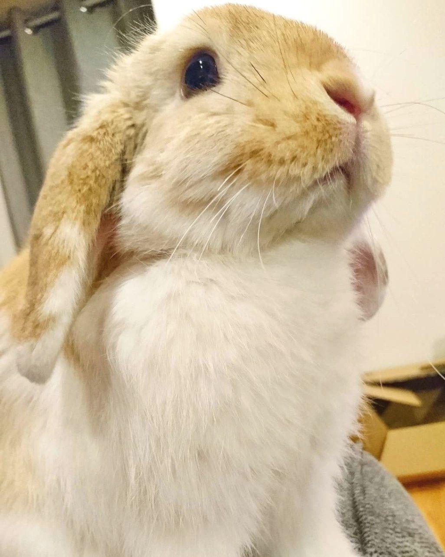 Playful Rabbit Pet Bunny Cute Animal Pictures Pet Rabbit