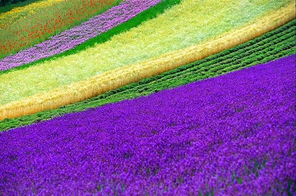 Extremely beautiful flowers field