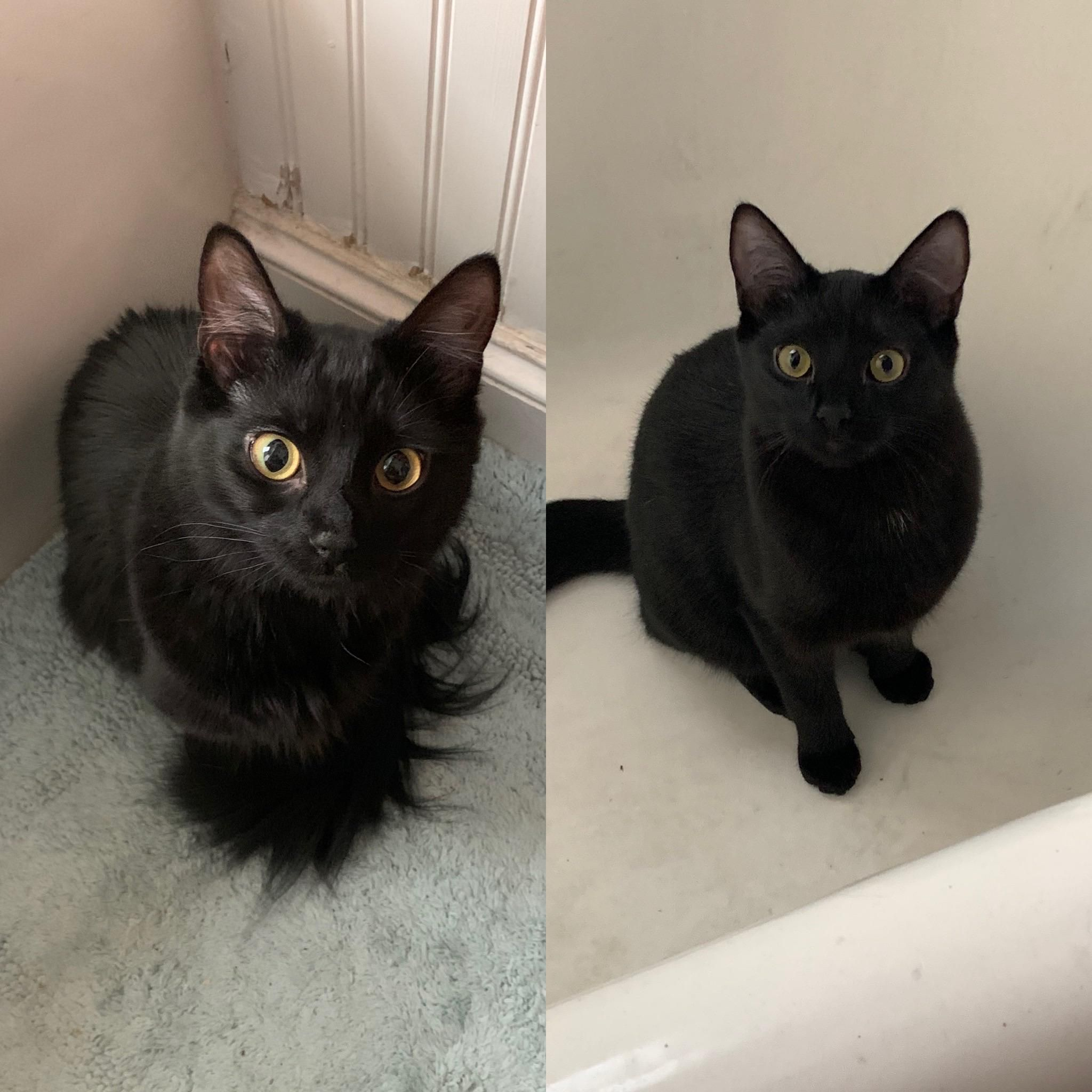They Like To Stare At Me When I Go To The Bathroom The Little One On The Right Is In The Tub Her Sister Is On The Bath Mat In 2020