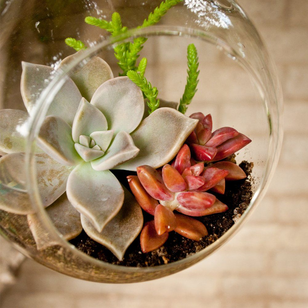 Exotic Container Homes: Drought-Tolerant Succulent Container Garden Plans