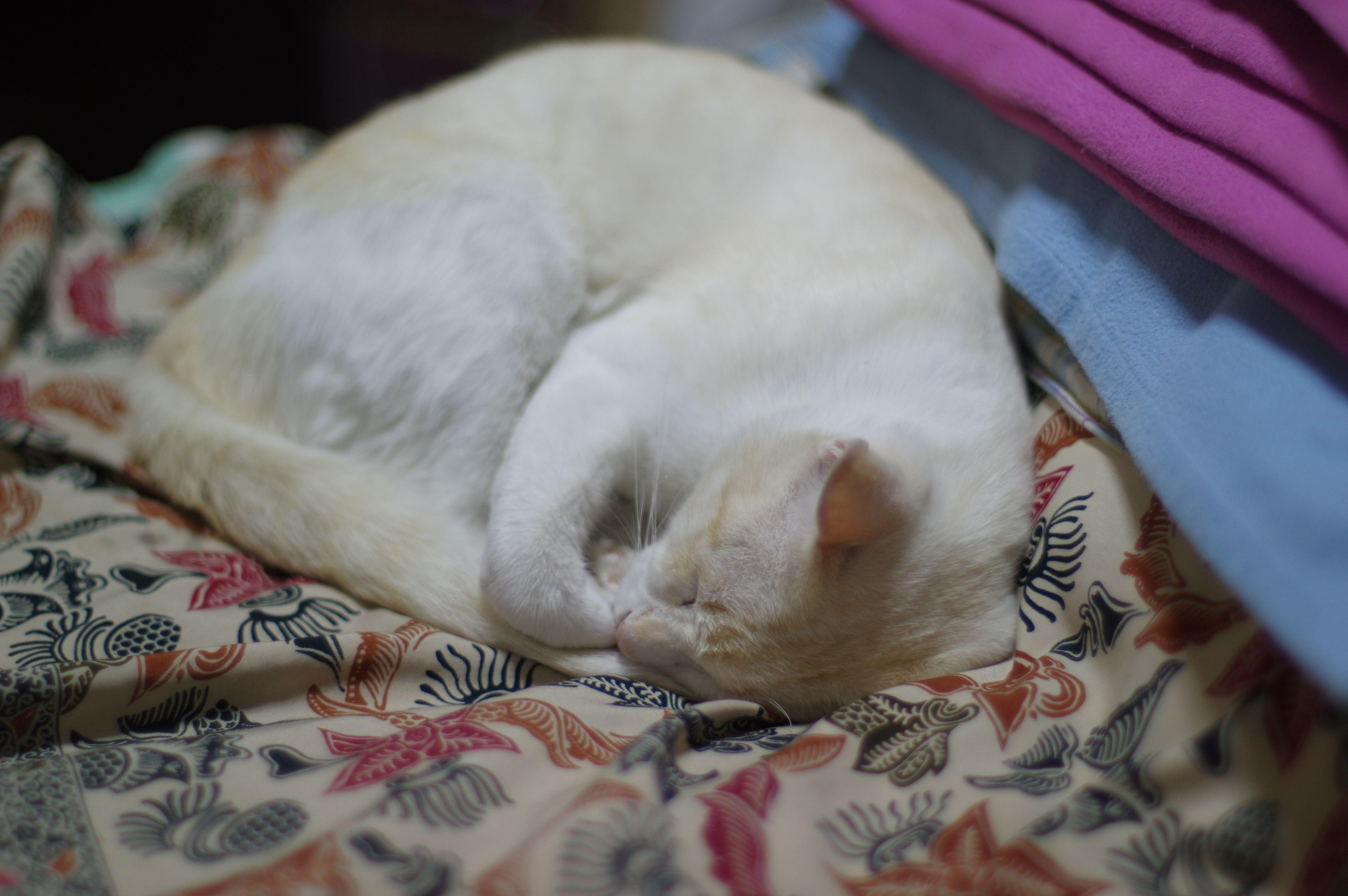 ผมเป นแมวข ร อน ต องเข ามานอนในห องแอร ตลอด และเป นแมว ท หล บง ายมากขอแค ม ลมเย นๆ