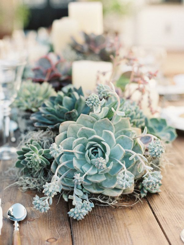 Charming Wood Table Gorgeous Succulents Plants Bouquet Boho Rustic Vintage