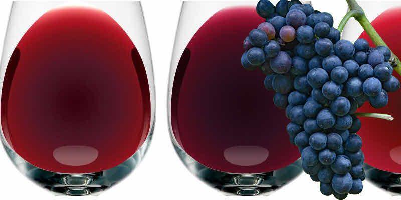 Food News Latam - La uva Malvec y sus atributos diferenciales en los vinos…
