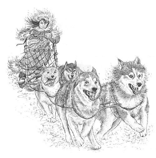 Dog Sled Finished Drawing This Is The Finished Drawings Married