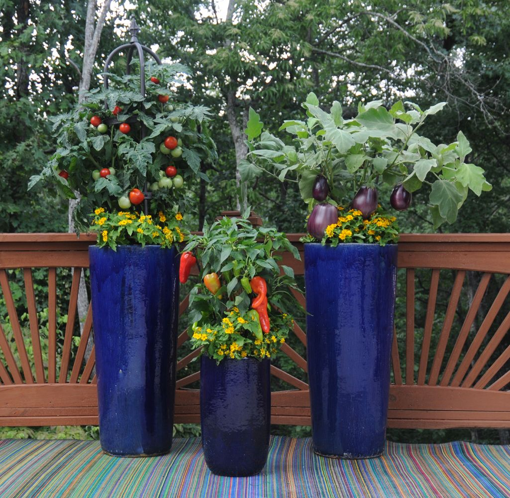 Tomatoes, Eggplant, And Peppers Are Planted Above Yellow