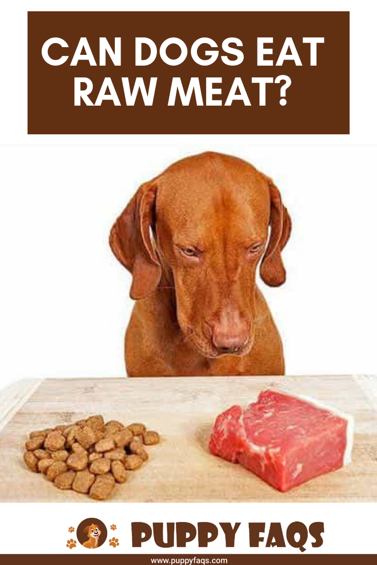 Can Dogs Eat Raw Meat? | Can dogs eat