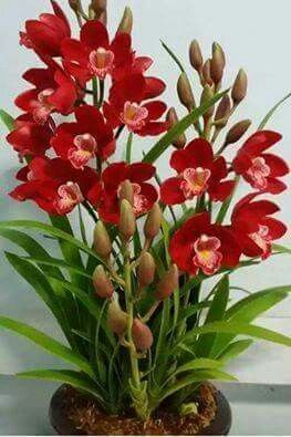 Pin On Orchids Collection