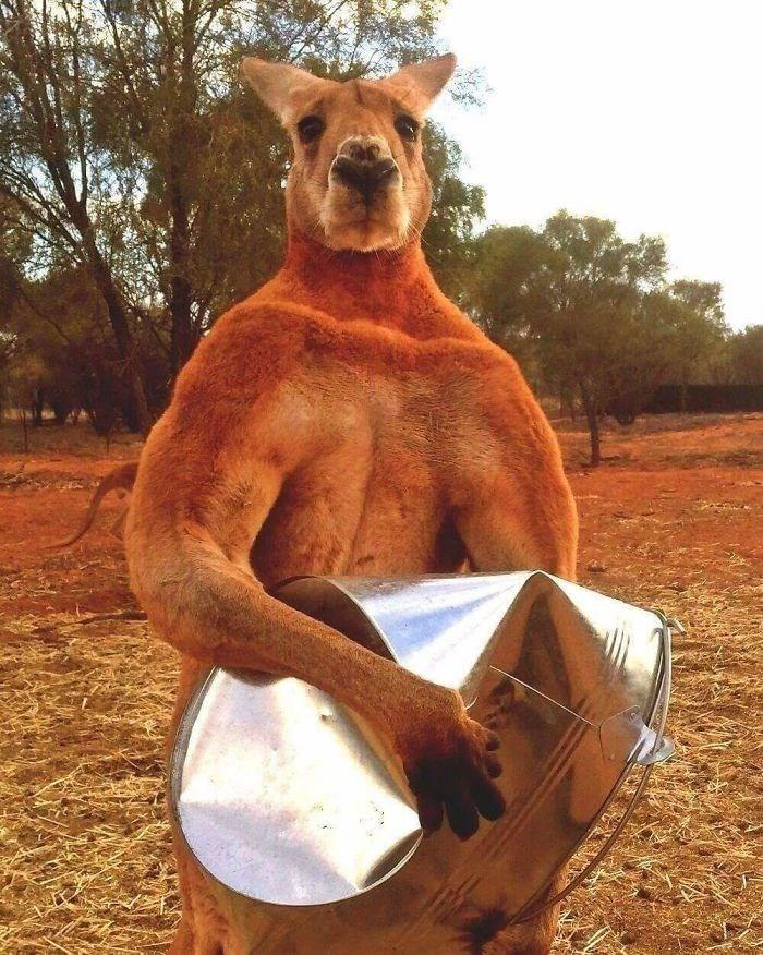 Picture This; Real Astounding Animal Pics Animal