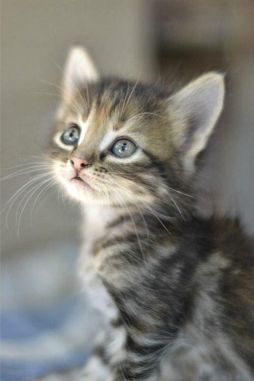 Susse Katzen Und Katzchen Mit Bildern Katzenbabys Tiere Katzen