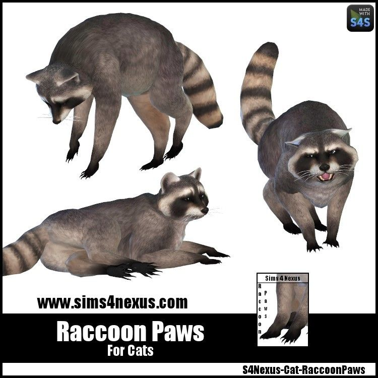 Raccoon Paws Sims Sims 4 Sims Pets
