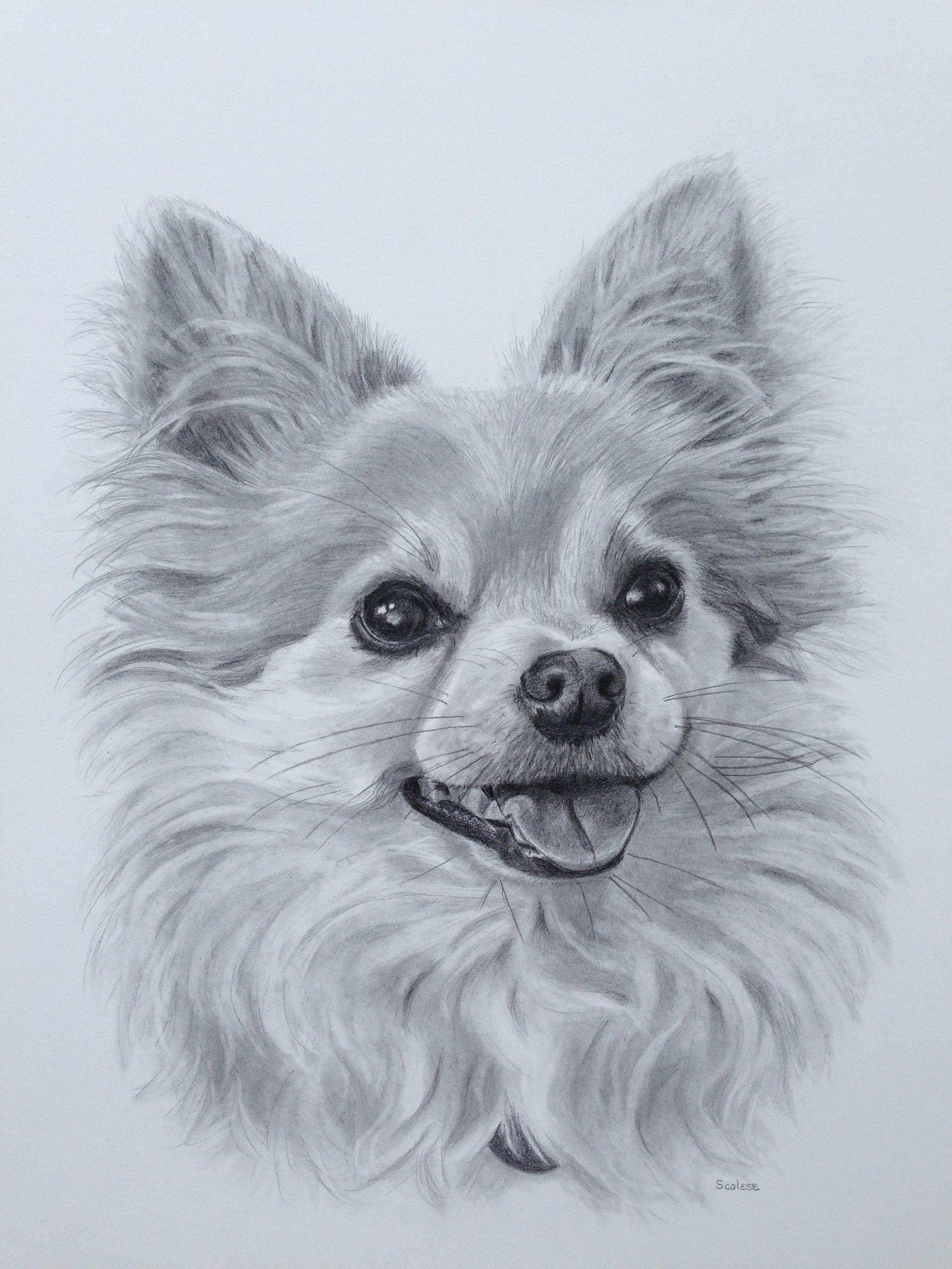 Peanut 11 X 14 Pencil Drawing Animal Drawings Dog Art Dog Drawing [ 3264 x 2448 Pixel ]