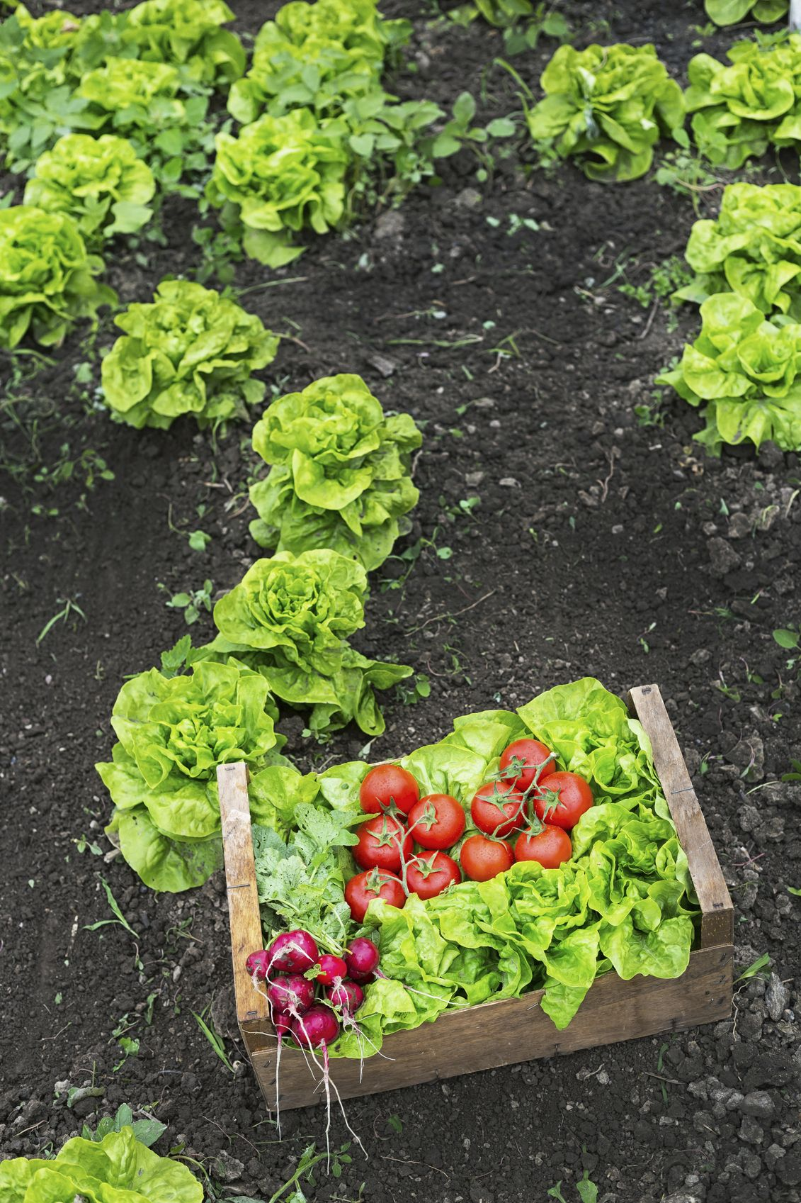 Get Started Growing Your Own Food Grow your own food
