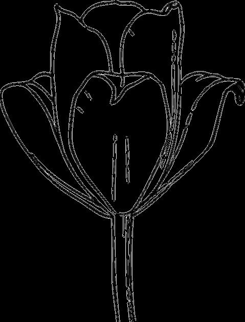 Fantastis 30 Lukisan Bunga Tulip Hitam Putih Bunga Hitam Dan Putih Mekar Gambar Vektor Gratis Di Pixabay Downloa Di 2020 Halaman Mewarnai Bunga Tulip Lukisan Bunga