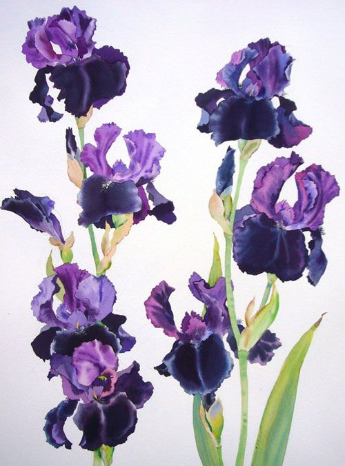 Introducing Artist Mary Woodin Iris Painting Iris Art