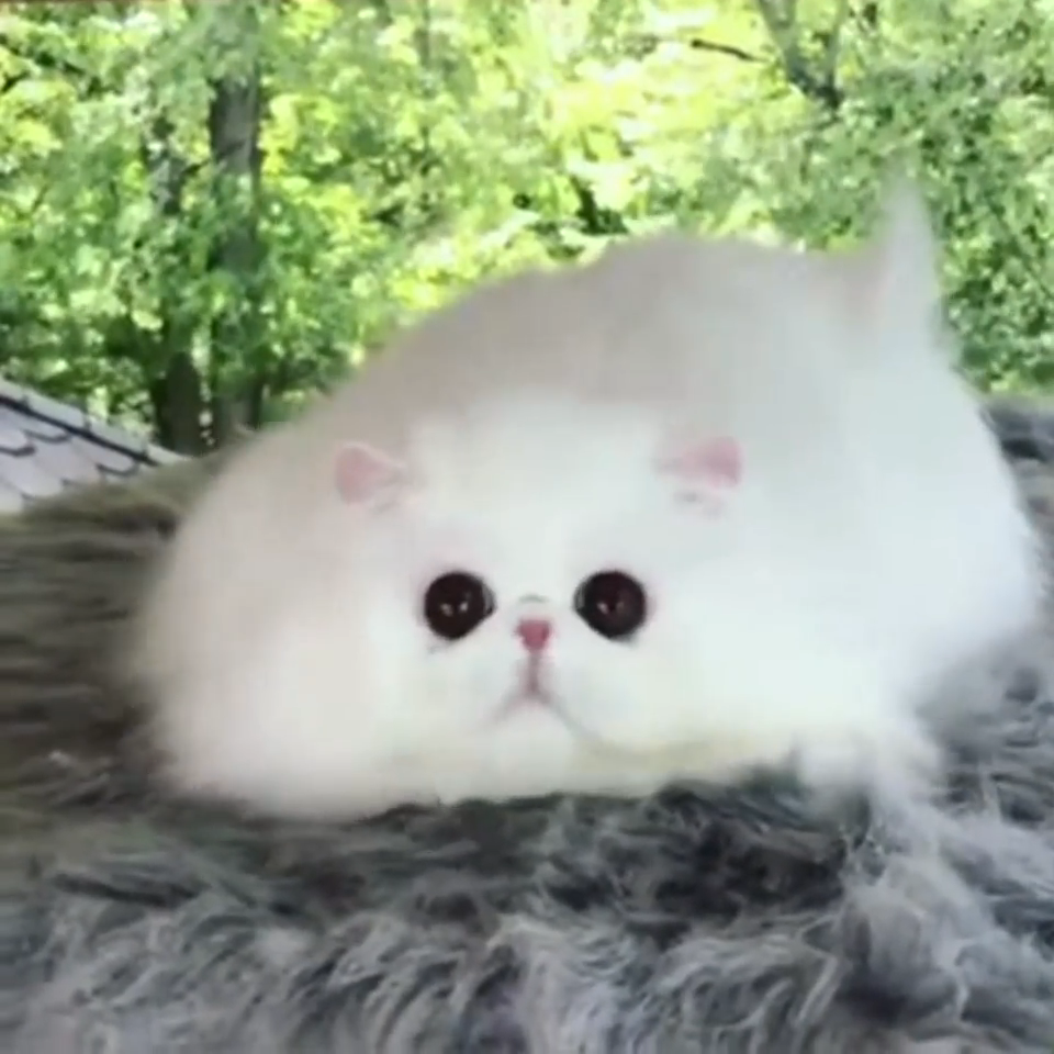 Floof: The Cloud Guardian