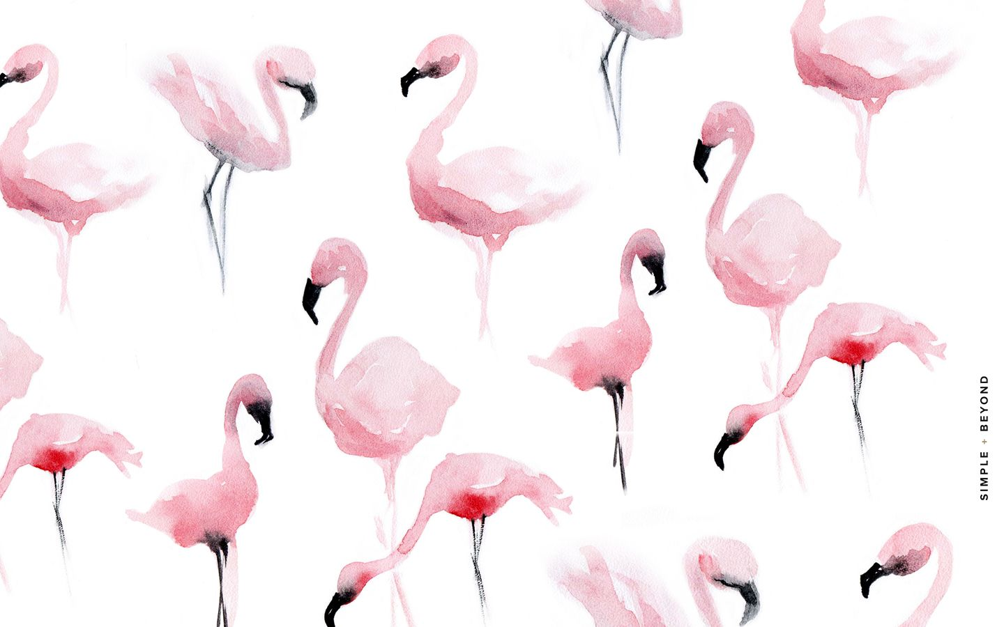 Pink Feathers Falling Wallpaper Flamingo Desktop Wallpaper Simple Beyond Desktop