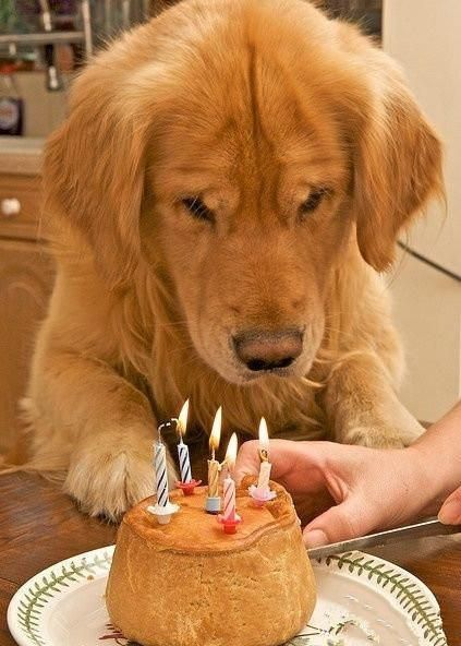 Hector S 5th Birthday Cute Animals Dog Quotes Dogs