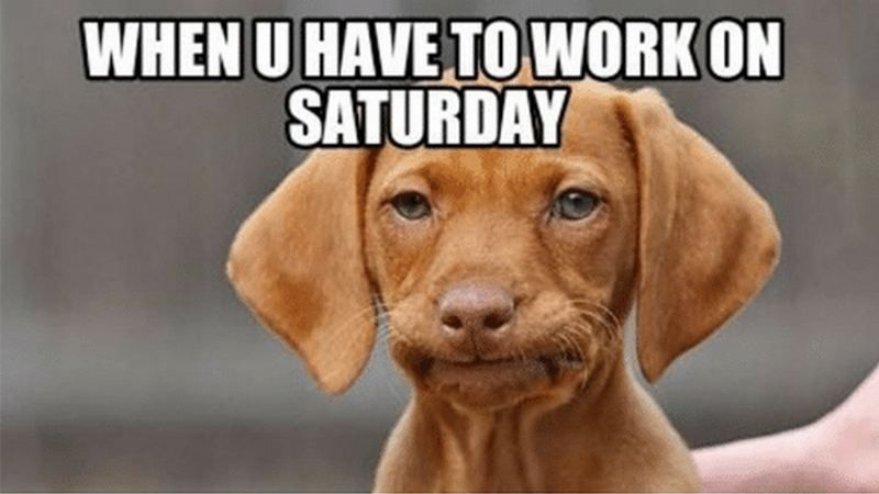 101 Funny Saturday Memes Will Make You Laugh From Morning Till Night Funny Saturday Memes Saturday Humor Saturday Quotes Funny