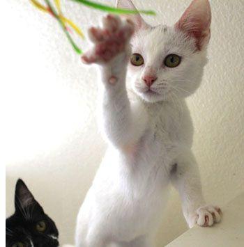 The Midnight Kitten Zoomies » AdoptaPet.com Blog