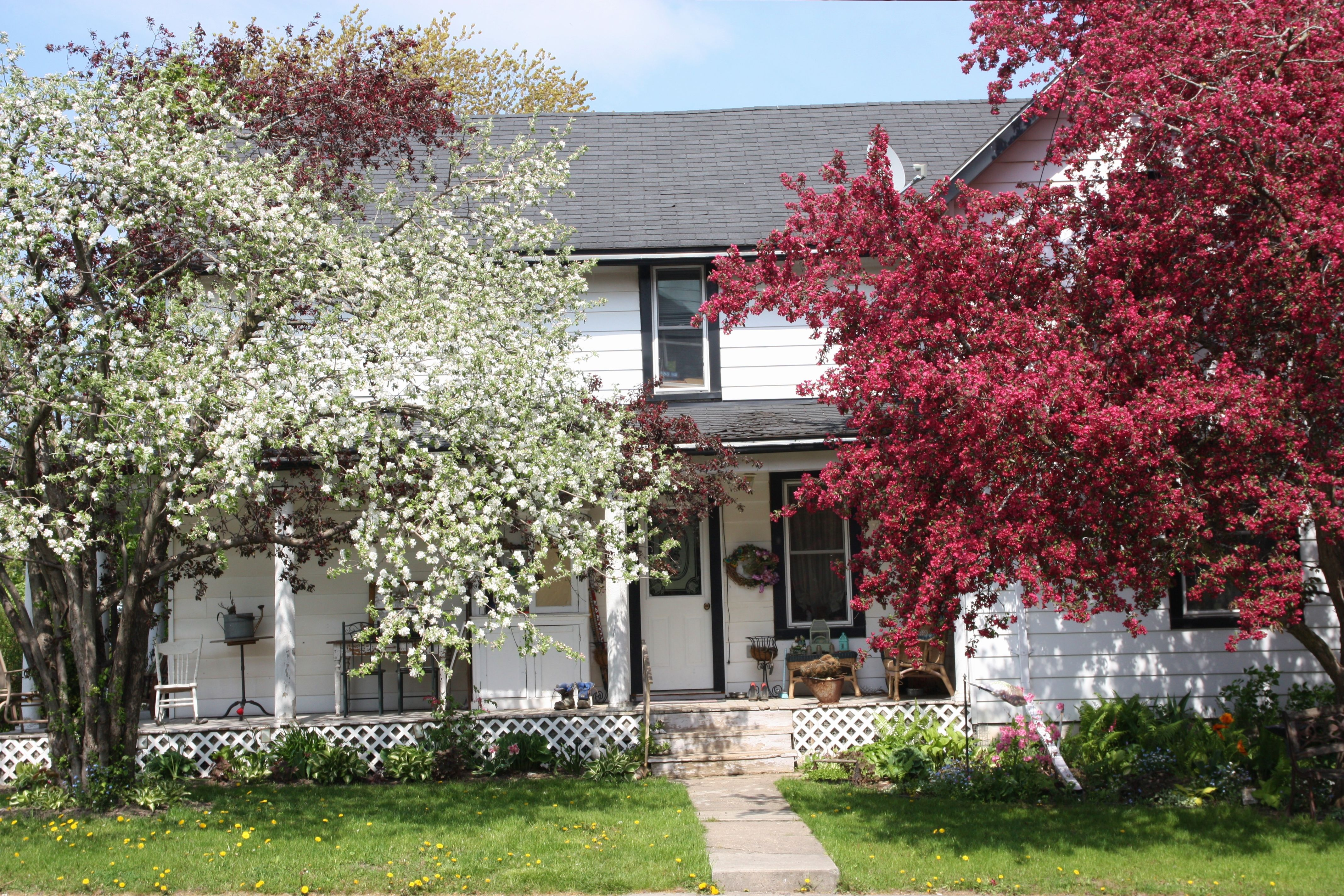 House On Adelphi St Napanee May 2017 Spring Photos