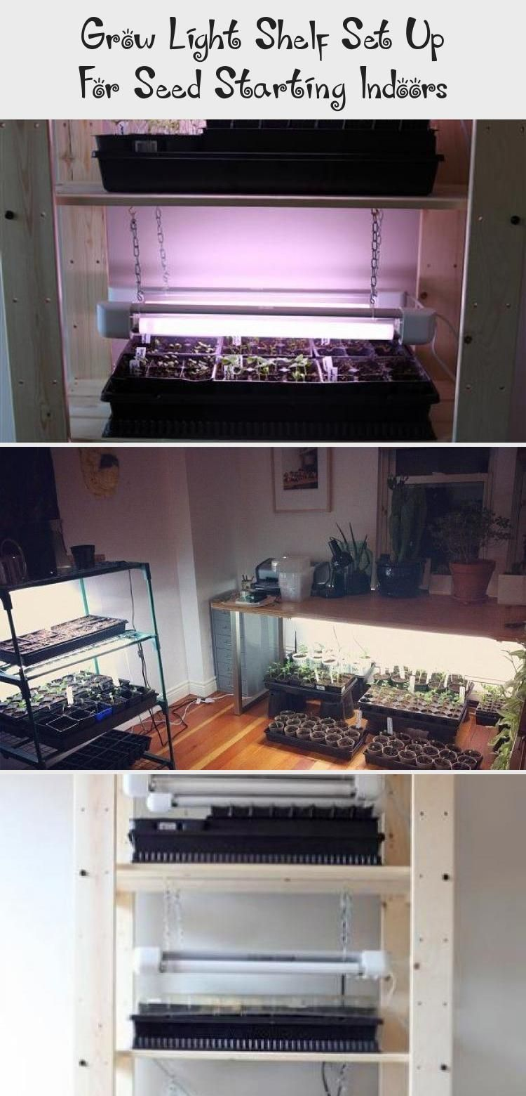 Grow Light Shelf Set Up for Seed Starting Indoors. Building plans to fashion your very own indoor grow op with an inexpensive Ikea shelving unit and some utility lighting. #gardentherapy #gardeningtips #indoorgarden     Here are a few Indoor gardening tips for the beginner who wants to grow a home vegetable garden.    Learn how to choose plants, containers and the best location for a vegetable garden.    Just because many of us do... #Garden #Grow #Indoors #Light #Seed #Set #Shelf #Starting