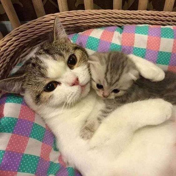 Cat Mom Hugging Her Kitten Catmom Kitten Catfamily Kittens Cutest Baby Cats Cute Cats