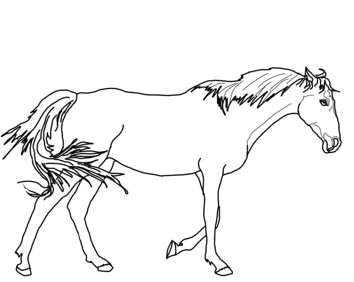 Walking Thoroughbred Horse Coloring Page Horse Coloring Horse Coloring Pages Horse Coloring Books [ 958 x 1200 Pixel ]