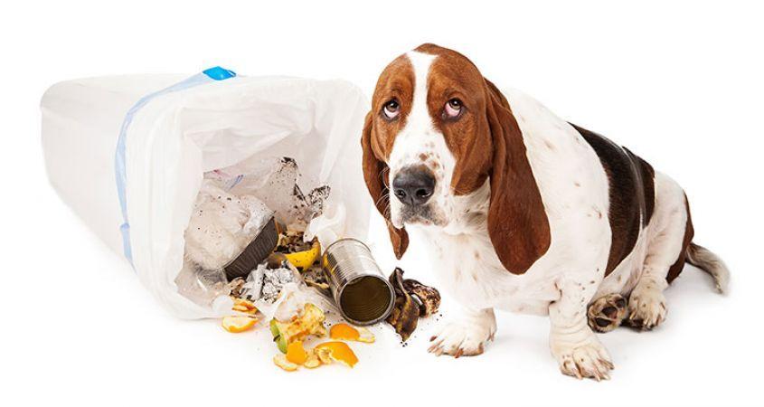 Dog Toy Interactive Large Medium Dog Training Fetch Toy Dental