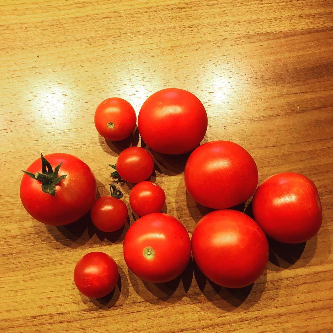 Tomaten Tomaten Tomaten Jetzt Geht Es Schlag Auf Schlag Bei Unseren Tomaten Jeden Tag Kann Geerntet Werden Was Macht Ihr Mit Dem Ganze Vegetables Tomato
