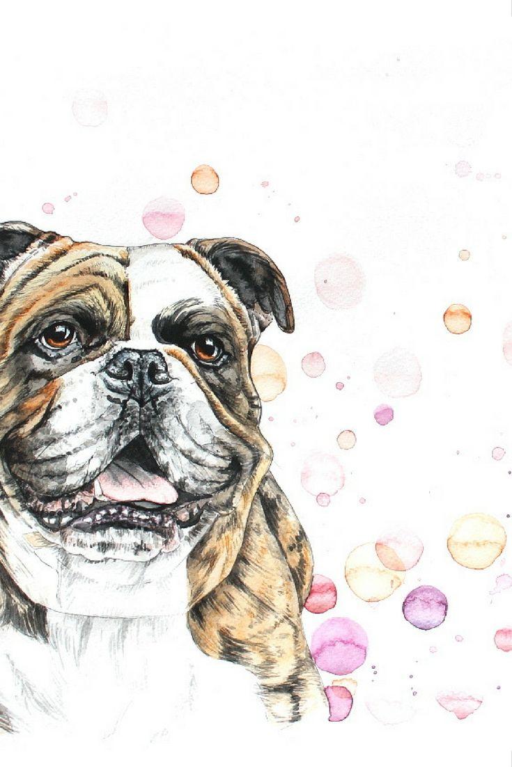 Nach Fotovorlage Tierportrait Hund Continental Bulldog