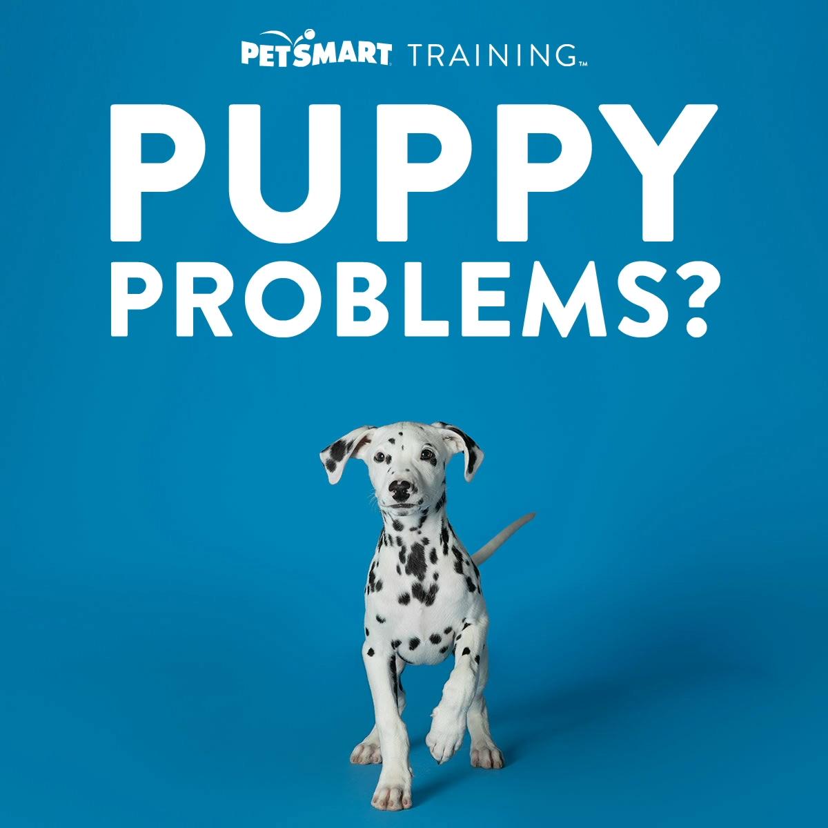 Petsmart Training Video Cat Breeds Dogs Pets Online