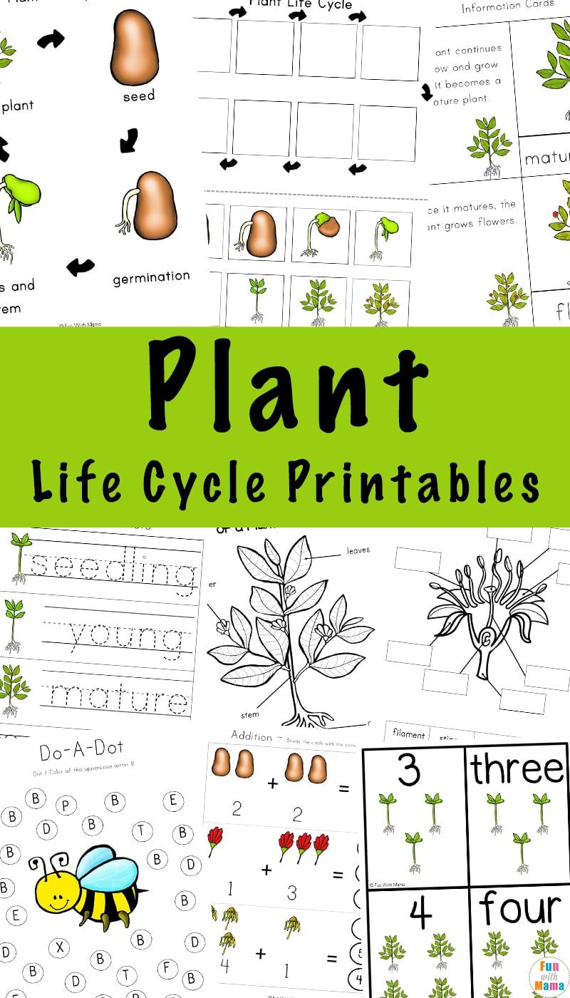 Plant Life Cycle Learning Pack Plant Life Cycle Plant Life Cycle Worksheet Life Cycle Learning [ 1400 x 800 Pixel ]
