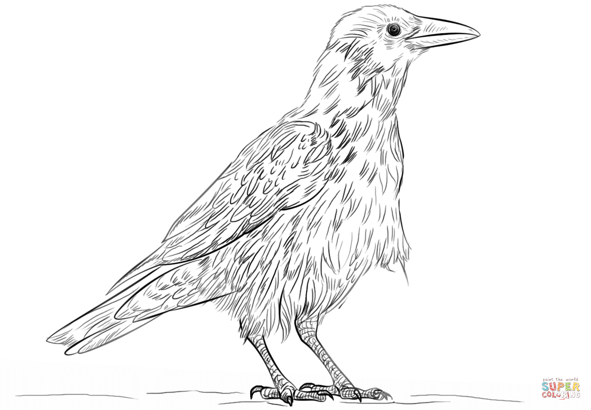 Hooded Crow Coloring Page Free Printable Coloring Pages Coloring Pages Free Printable Coloring Pages Free Printable Coloring