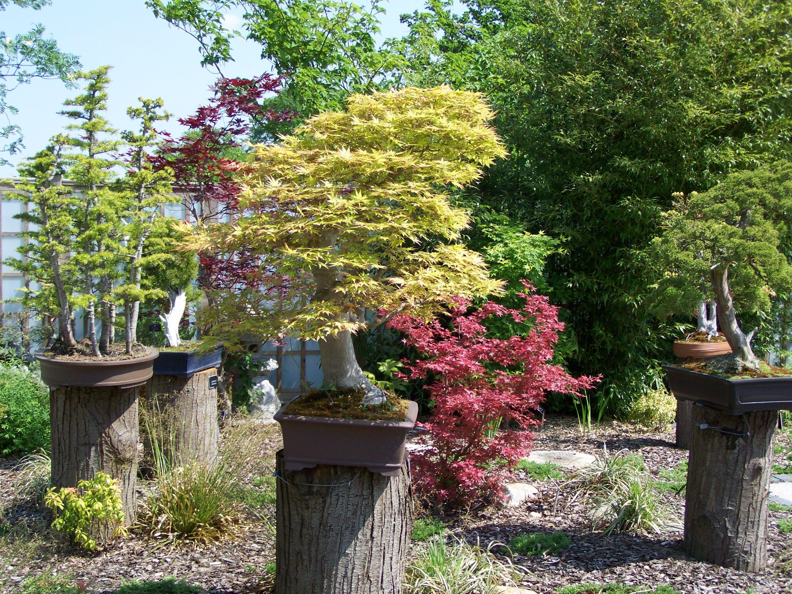 The bonsai trees are something unique despite their small for Unique bonsai trees