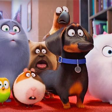 Secret Life Of Pets 2 To Be Unleashed In 2018 Secret Life Of