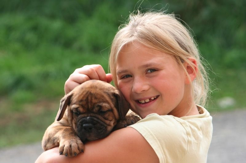 Laura Mit Baby Continental Bulldog Www Asgards Pride Com Bulldog Breeds Old English Bulldog English Bulldog