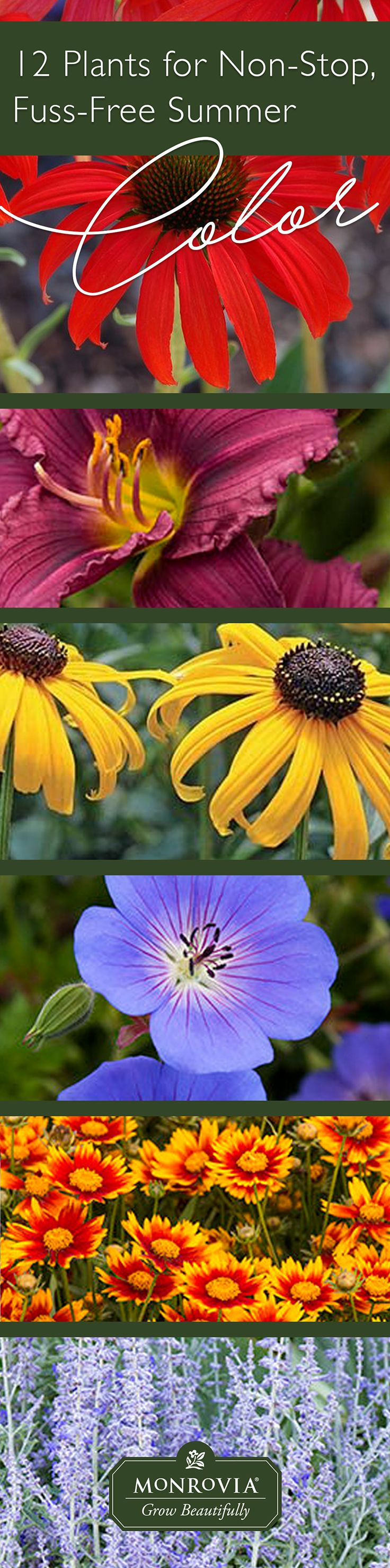 Get Non Stop Summer Color Zone 4 7 Summer Plants Pinterest