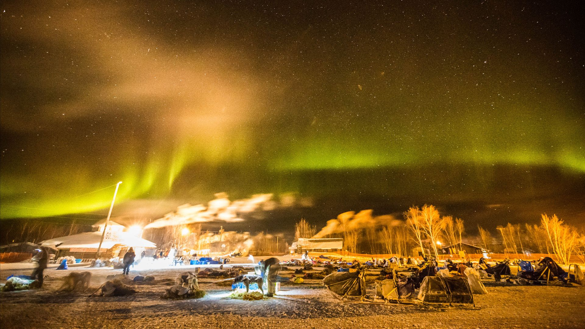 http://www.adn.com/video/video-iditarod-dogs-rest-under-northern-lights